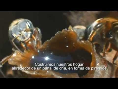 """Grabado en la comunidad de Chablekal, Yucatán Agradecimiento especial al apiario : """"Miel Lol Be"""" https://www.facebook.com/aluxesonlineyucatan www.aluxesonlin..."""