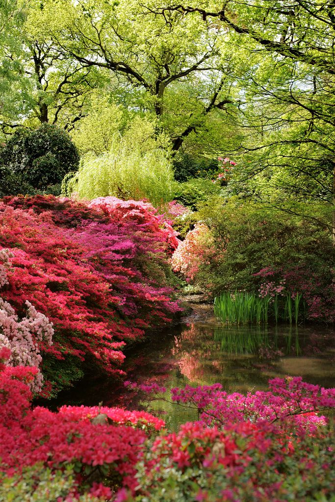 Isabella Plantation, Richmond Park London, England --This world is really awesome. The woman who make our chocolate think you're awesome, too. Our flavorful chocolate is organic and fair trade certified. We're Peruvian Chocolate. Order some today on Amazon!http://www.amazon.com/gp/product/B00725K254
