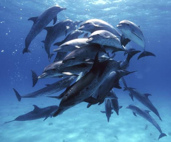 delfines salvajes