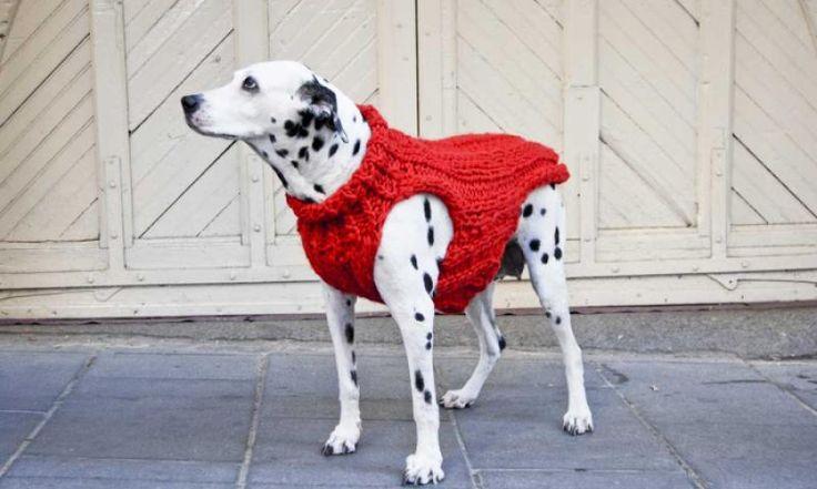Gemütlich wärmender Hunde-Sweater