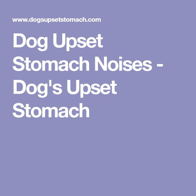Best 25 Dog Upset Stomach Ideas On Pinterest Dog Upset