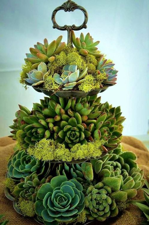Tiered Succulents I like this idea, just use a recycled cake stand with dirt and succulents. I have a large number over growing my strawberry pot out front.. Time to try this idea in the back for sure!