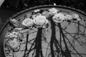 black and white photos: Gothic Beautiful, Floating Flowers Peonies, Floating Candles, Water Gardens, Little Birds, Flowers Power, Birds Bath, Fish Ponds, Flowers Art