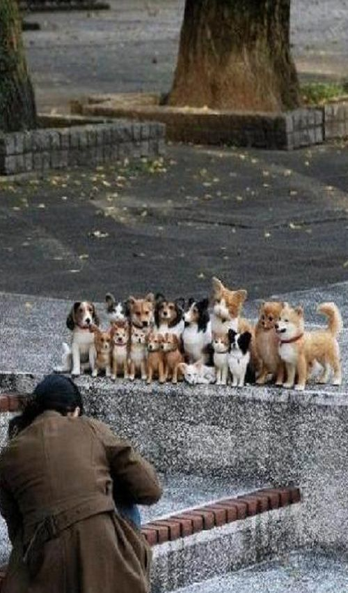 """How in the world did this photographer get all these dogs to sit still and """"pose"""" for this photo??"""