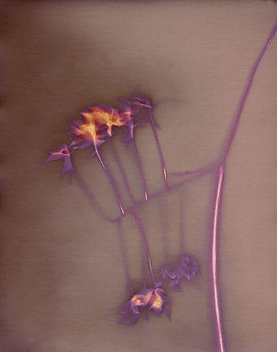jerry burchfield lumen prints - Google Search
