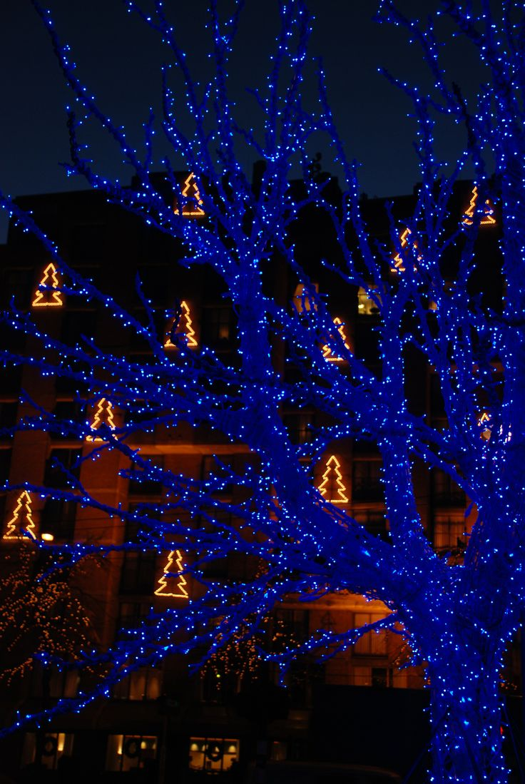 Blue christmas lights in bedroom - Find This Pin And More On Christmas Colors Blue Christmas Lights