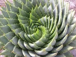 Image result for logarithmic spirals