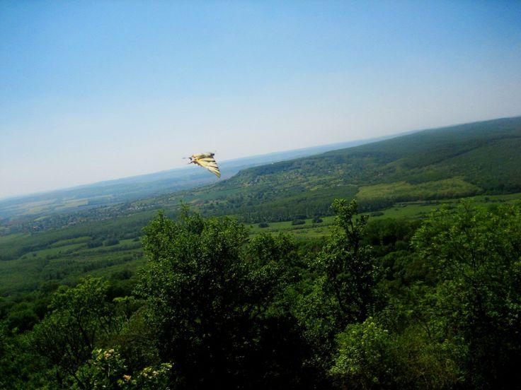 Panoráma - fecskefarkú pillangóval és a zalaszántói Béke Stupával // Paranormal (butterfly) activity  :) at Peace Stupa, Hungary - Zalaszántó (in background)