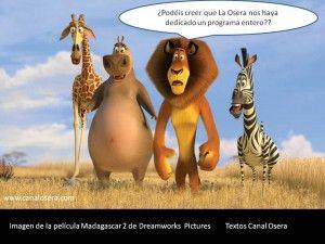 Capítulo 58 de Osera Radio: Especial Madagascar, con las tres películas de Madagascar y Los Pingüinos de Madagascar