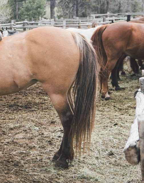 Bone Spavin How To Treat A Horse With This Terrible Disease