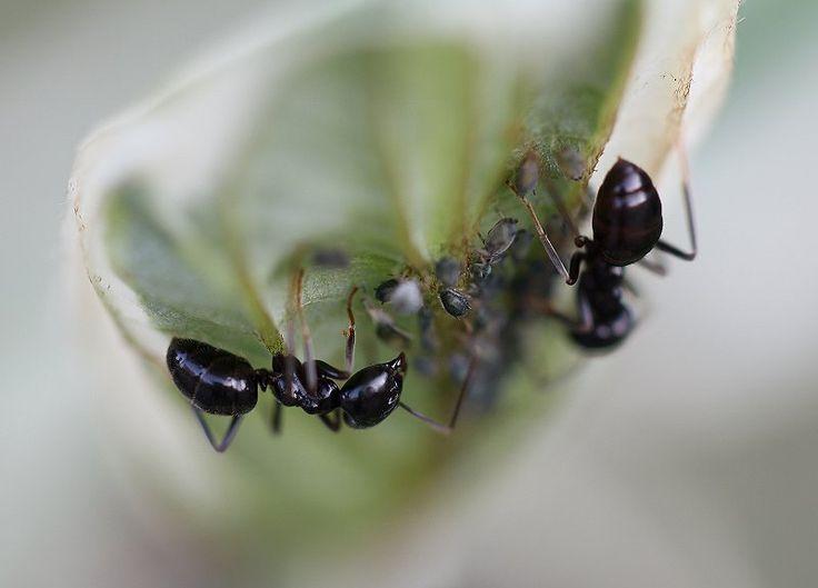 My Photo Gallery - Ants