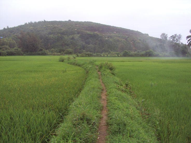 the walk in the fields