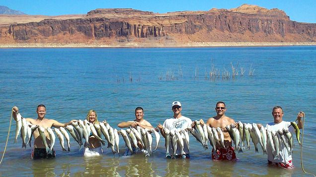 Lake powell if you like fishing now is the time for Lake powell fishing