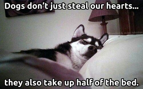 My fur babies do this all the time