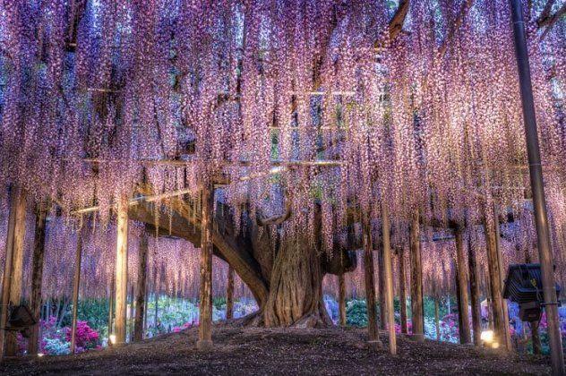 Ashikaga Flower Park: Ο πιο μαγικός προορισμός με λουλούδια, πασχαλιές και ανθισμένους κήπους | eirinika.gr