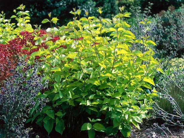 205 best images about plant identification on pinterest for Landscape bush identification