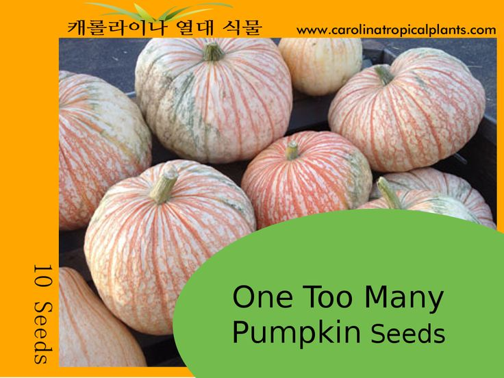 One Too Many Pumpkin Seeds F1 - 10 Seeds  This is a truly distinctive ornamental pumpkin that has great decorative potential. Large vines produce white fruit that are laced with reddish colored veins. The pumpkins resemble a bloodshot eye and weigh 20 to 25 lbs. One Too Many can vary in shape from round to a flattened oblong shape. Intermediate resistance to powdery mildew.