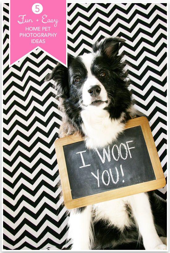 5 Fun & Easy Home Pet Photography Ideas | Pretty Fluffy