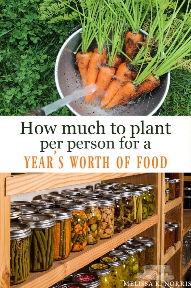 How Much To Plant Per Person For A Year S Worth Of Food Home