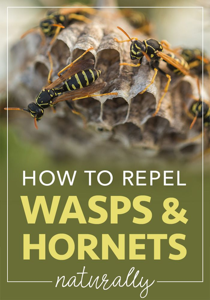 How To Get Rid Of Bees In Hot Tub