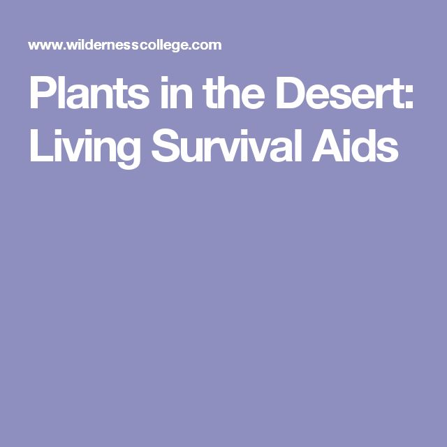 Plants in the Desert: Living Survival Aids