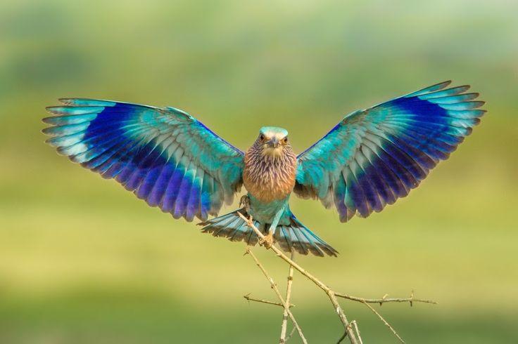 bird wings spread - 736×490