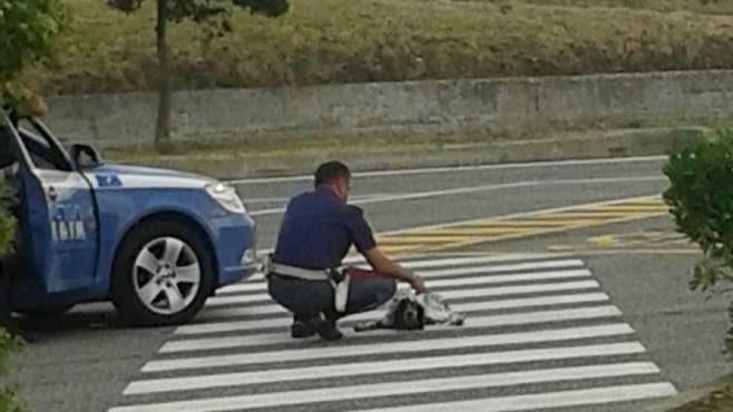 Avellino, cane abbandonato in strada salvato da un agente di Polizia - http://www.wdonna.it/avellino-cane-abbandonato-in-strada-salvato-da-un-agente-di-polizia/61340?utm_source=PN&utm_medium=WDonna.it&utm_campaign=61340
