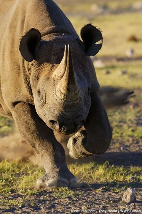 Stop the Murder of Rhinos!