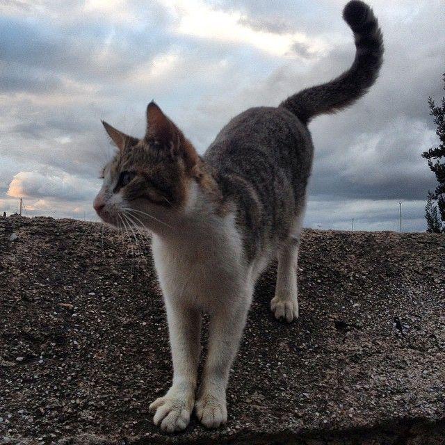Cats of Spetses - photo M. Koulaloglou