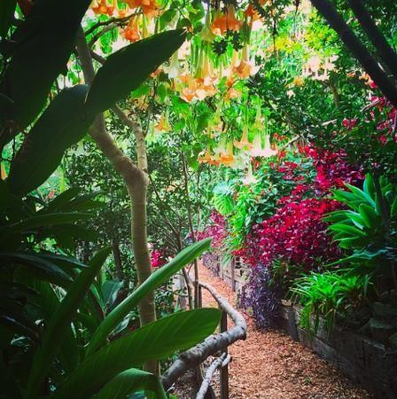 Wendy Whiteley's secret garden of love