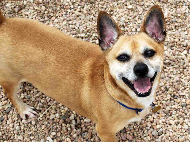 Pet Adoption At The Dumb Friends League Denver Co Dumb Friends League Pet Adoption Pets