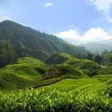 Agro Wisata Kebun Teh Tambi Terletak 16 km arah utara Kota Wonosobo, Jawa tengah atau kurang lebih 20 menit perjalanan dengan mobil. Agro Wisata Perkebunan Teh Tambi merupakan pilihan pilihan wisata yang menarik bagi pecinta alam Pengunungan. Di mana area Perkebunan yang cukup luas sekitar dengan luas lahan 829,14 hektar dan terdiri atas 3 unit perkebunan yaitu unit Tambi, Unit Bedakah,Unit Tanjungsari. Kegiatan utama yang dapat di lakukan di Perkebuan Teh Tambi adalah Tea Walk.