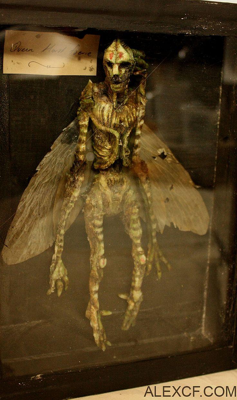 Specimens — Merrylin Cryptid Museum Homomimus Arthropodus