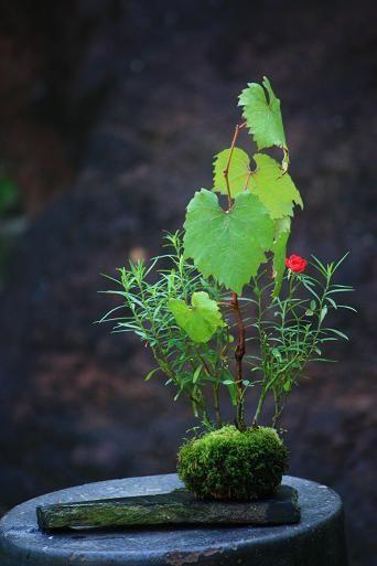 チョコレート盆々-ブドウの変遷
