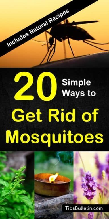Includes Natural Recipes And Tips For Homemade Mosquito Repellents Essential Oils Traps Nets Plants Perfect To Get Rid Of Mosquitoes From Yards