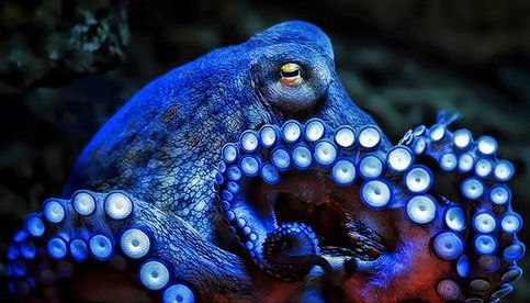 The Mysterious World of Octopuses, and The Dirty on Down | Animal ...