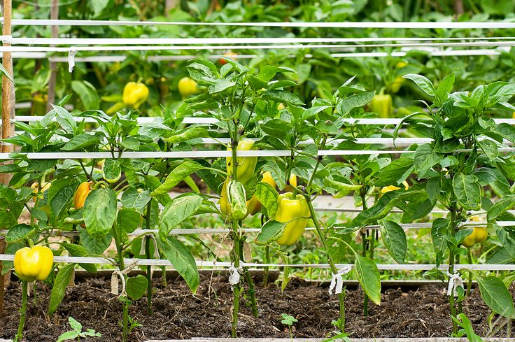 656 Best Images About How Does Your Garden Grow On 400 x 300