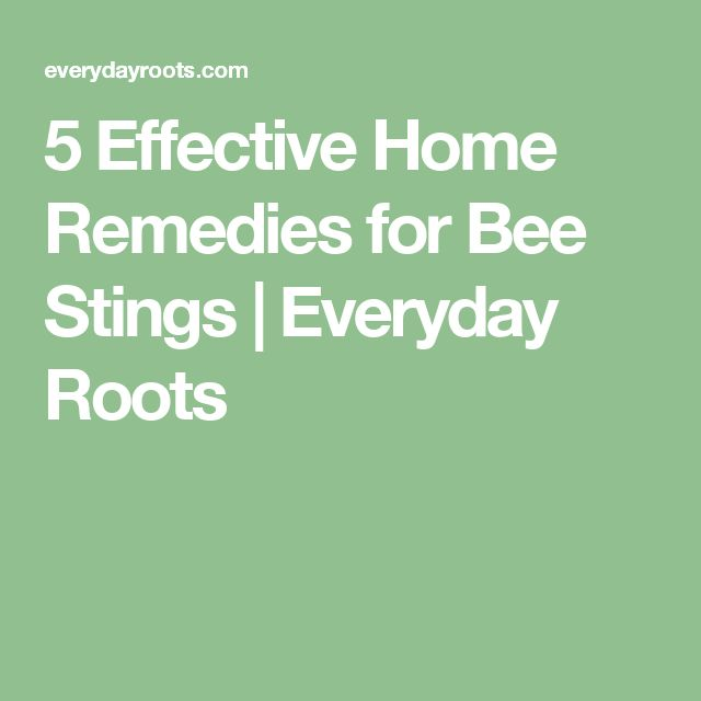 5 Effective Home Remedies for Bee Stings   Everyday Roots