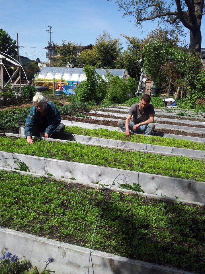 52 best huertos images on pinterest backyard ideas - Huerto vertical ikea ...