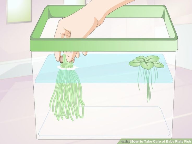 How to Take Care of Baby Platy Fish: 9 Steps (with Pictures)