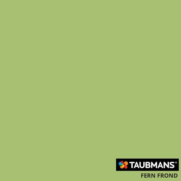 #Taubmanscolour #fernfrond -- skirtings, and r.h. Wall of entrance