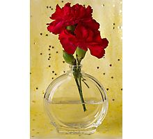 Photographic Print.  #carnation #redcarnation  #redflower #carnationart  #floralhomedecor #sandrafoster #sandrafosterredbubble