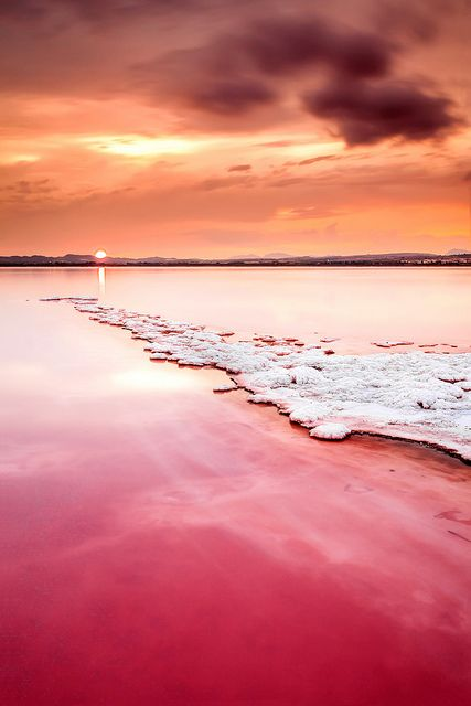 Wow, I've never seen this before! Salt River, Torrevieja, Valencia, Spain