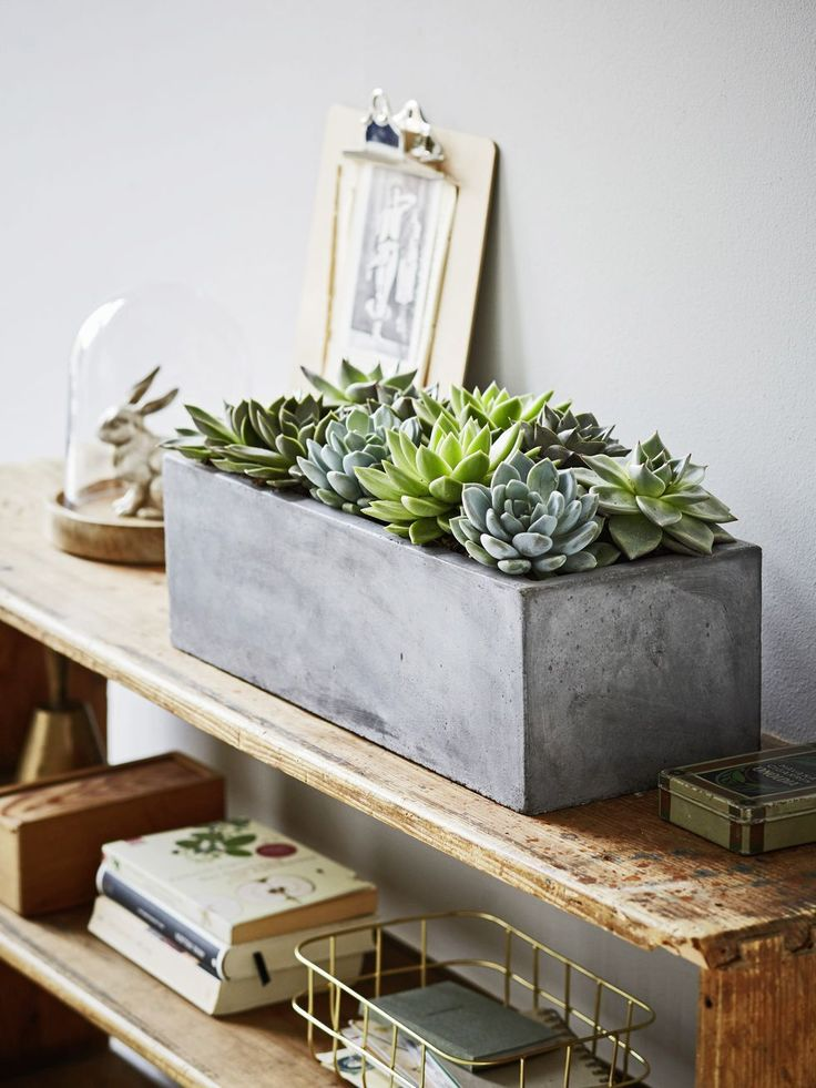 Une décoration succulente