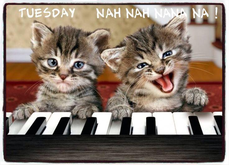 https://i.pinimg.com/736x/54/d3/77/54d377000631c086030242b70ad27f79--funny-animals-funny-cats.jpg