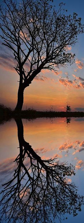 sunset tree reflection #via: 500px.com --  Sarawut Intarob