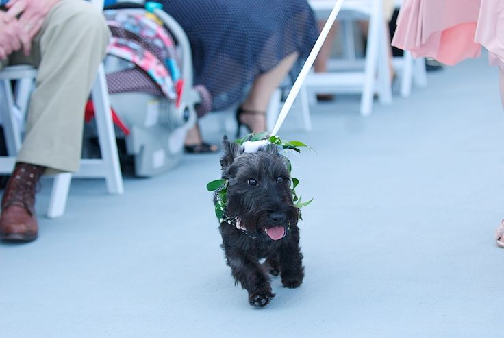 #dog #wedding: Dogs Wedding, Dog Wedding