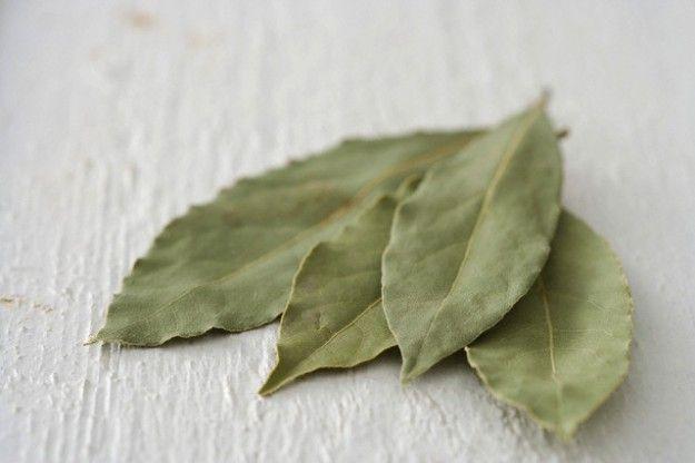 Hera.bg - Дафиновият лист - много приложения и лесно отглеждане | Ароматните листа на лавровото дърво