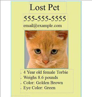 Cats Happen: Finding a Lost Cat