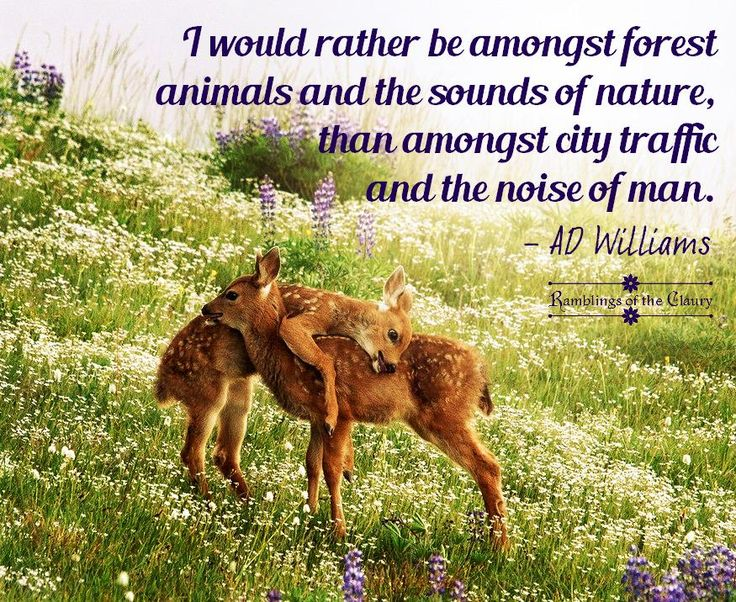 "Image result for ""I would rather be amongst forest animals and the sounds of nature, than amongst city traffic and the noise of man."""